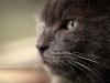 cat_1300_768